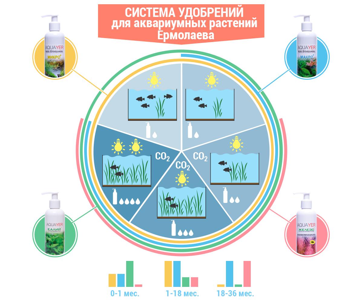 система ермолаева инфографика